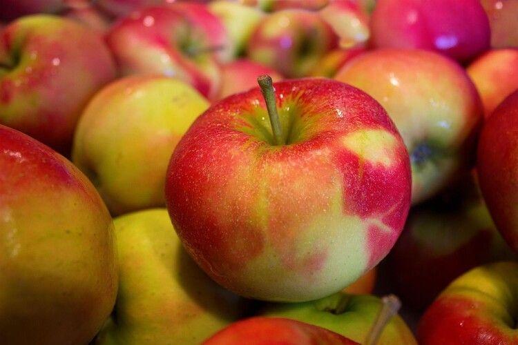 У цьому сезоні урожай яблук збільшиться на 20-40 відсотків
