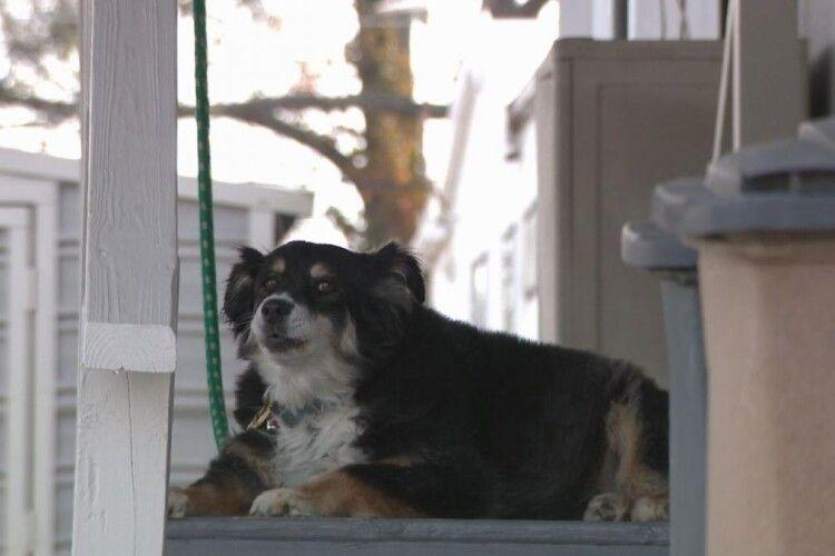 Американець заповів улюбленому собаці п'ять мільйонів доларів