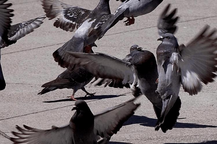 На Волині під час панахиди над портретами загиблих здійнялися голуби…