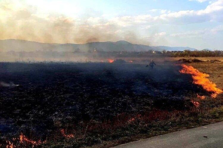 На Закарпатті чоловік умисно спалив 9 гектарів заповідника «Долина нарцисів»