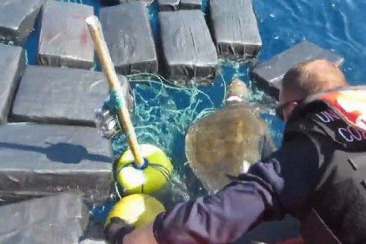 Черепаха знайшла для поліції кокаїну на 53 мільйони доларів