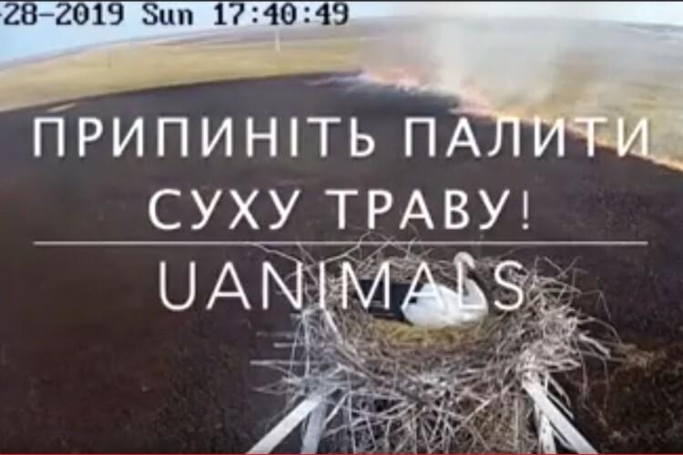 Припиніть палити суху траву! (Відео)