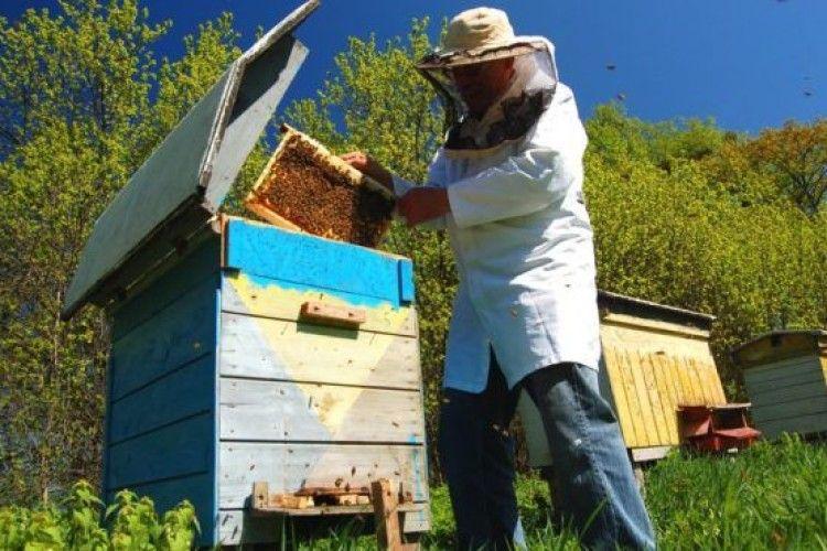 Українських бджолярів попереджатимуть про хімобробку полів на спеціальному сайті