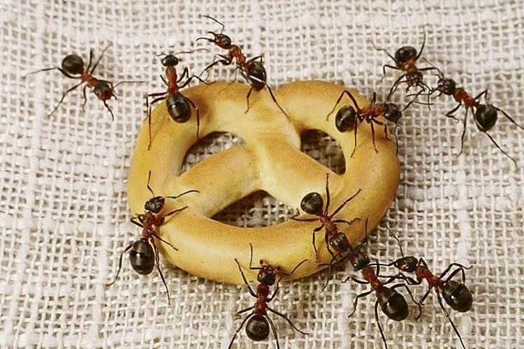 Геть із дому! Як позбутись мурах