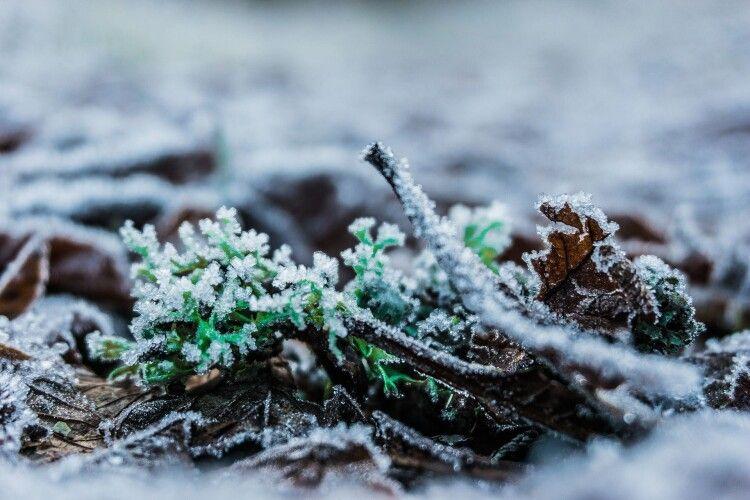Синоптики попередили про заморозки й перший сніг в Україні