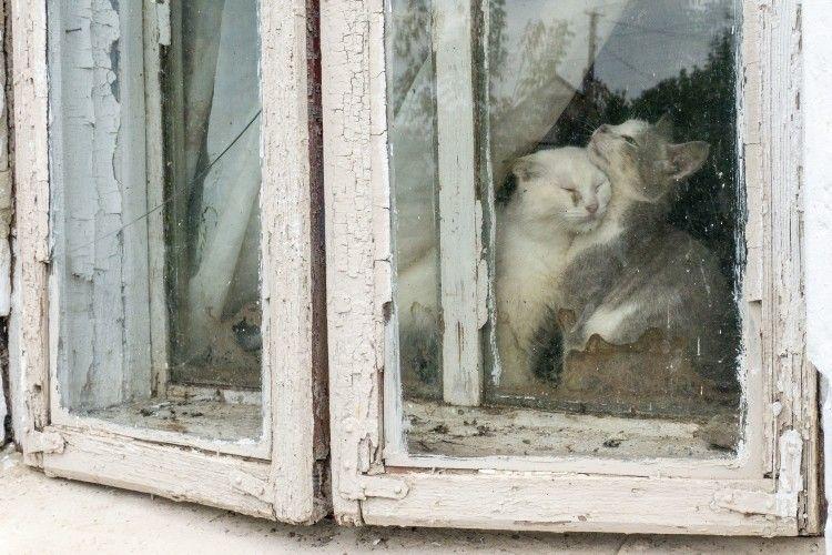 За цим вікном котяче життя, якого ми так і не побачили.