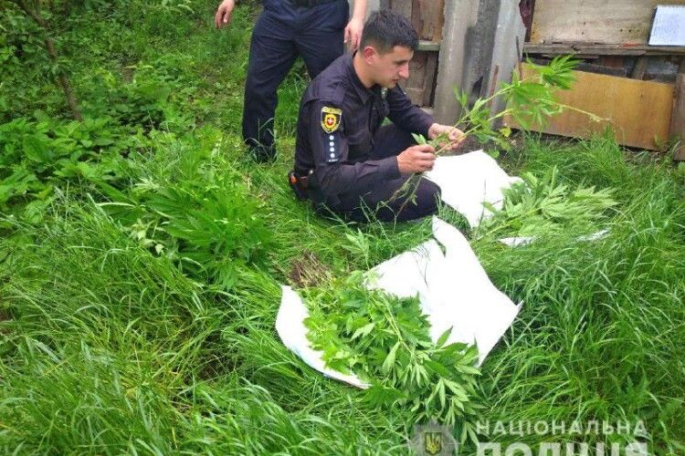 Рівнянка впустила поліцейських на подвір'я, а там плантація конопель (Фото)