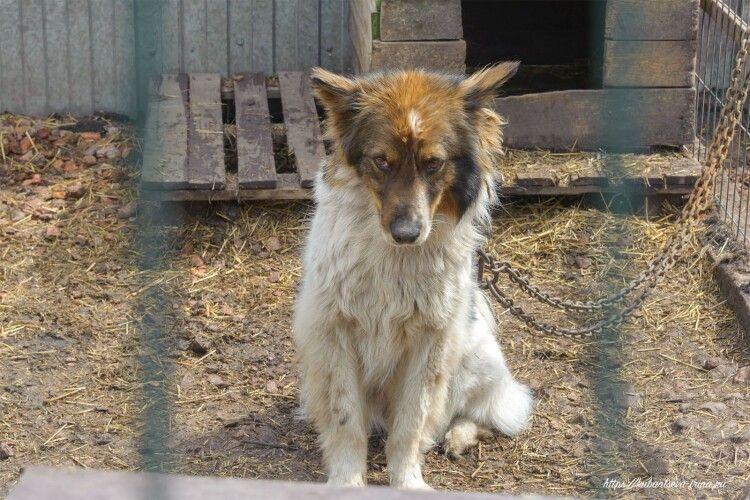 На Горохівщині домашній насильник ховався у собачій буді й затулявся псом