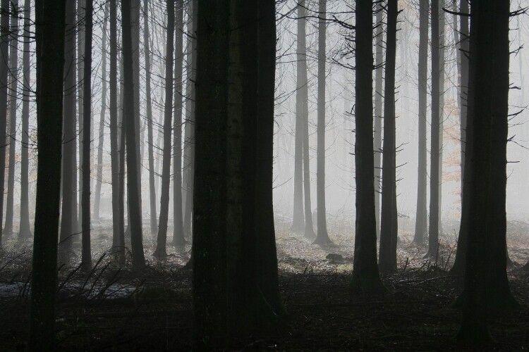 У лісі знайшли мертвою молоду дівчину: у вбивстві підозрюють музиканта
