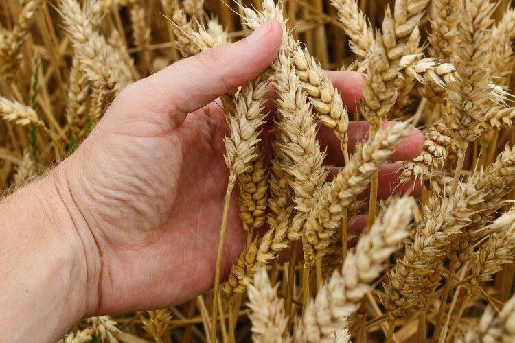 З України експортували 25,2 млн тонн зерна