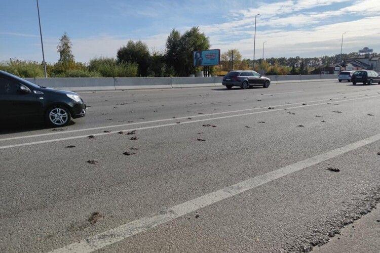На трасі Київ-Одеса вантажівка збила велетенську зграю шпаків (Фото)