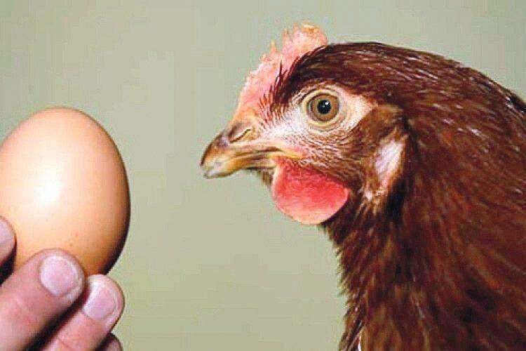 Яйця великі імалі
