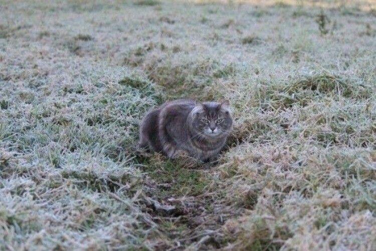 Погода на суботу, 23 травня: знову нічні заморозки на поверхні ґрунту!