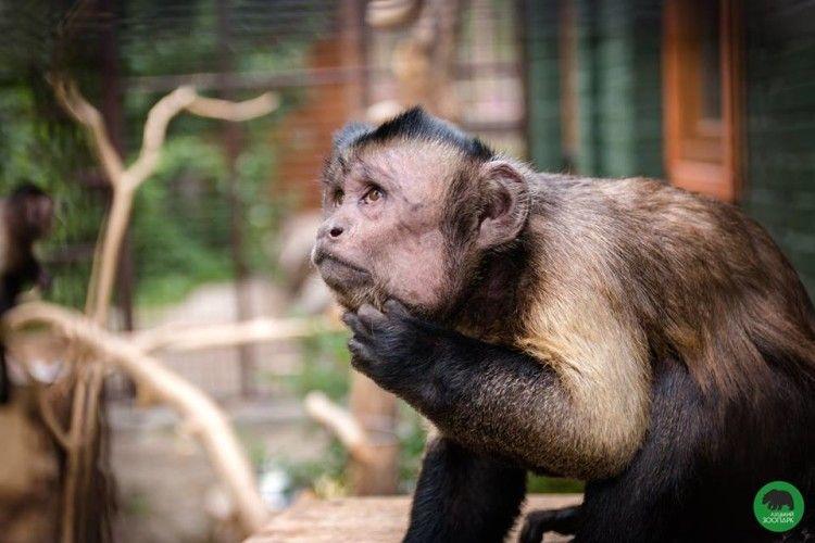 У Луцький зоопарк завтра за півціни пускатимуть відвідувачів з метеликами у животі