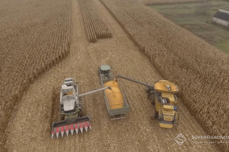 У господарстві на Волині кукурудзу збирають і взимку (Відео)