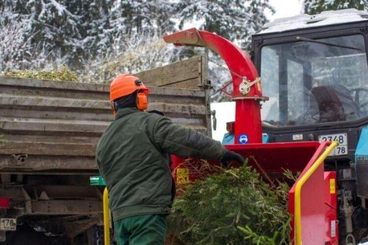 У Ковелі новорічні ялинки можна здати на переробку