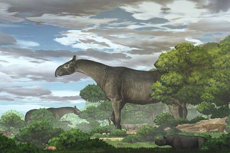 Знайшли рештки носорога, який був вищим за жирафа