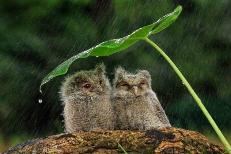 Погода на суботу, 20 червня: короткочасний дощ, гроза, місцями град