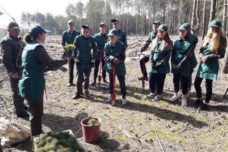 Волиняни долучилися до акції «Створюємо ліси разом»
