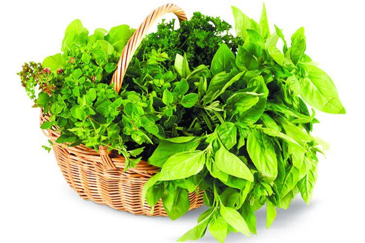 Як зберегти зелень свіжою?