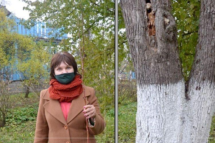На території Музею уКиєві посадили Лесину грушу