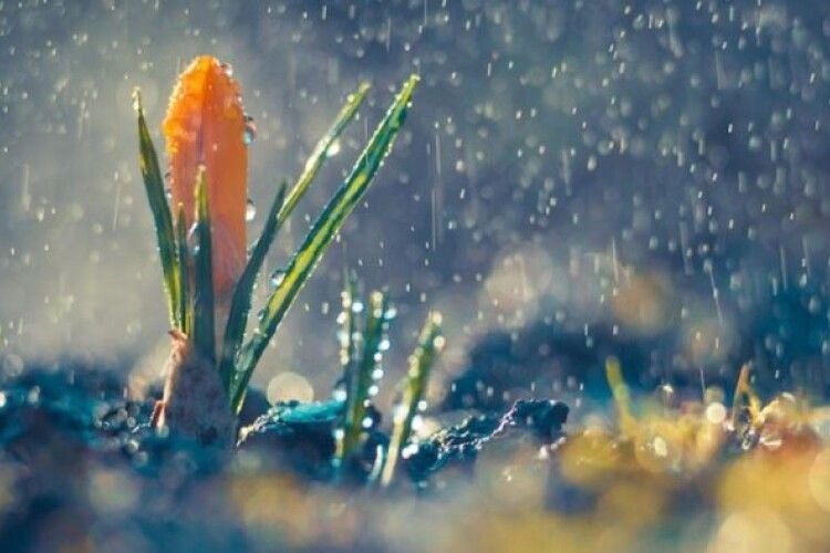 Погода на п'ятницю, 16 квітня: на Волині дощитиме під північно-західний вітер