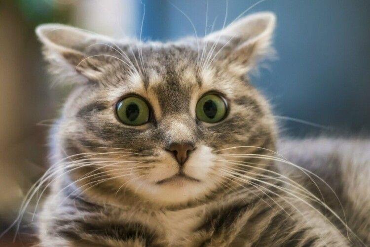 В Одесі учениця першого класу «замінувала» рідну школу: кортіло якнайшвидше чкурнути додому – погратися з котиком