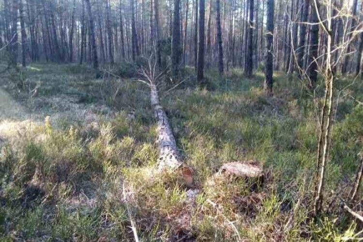 На Любомльщині лісова охорона затримала лісопорушників