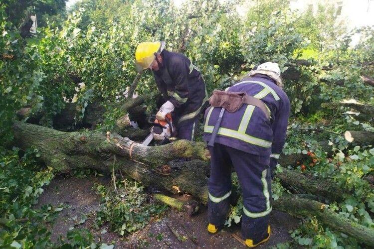 Дорогу з Луцька до Дубна перекрило 16 повалених дерев