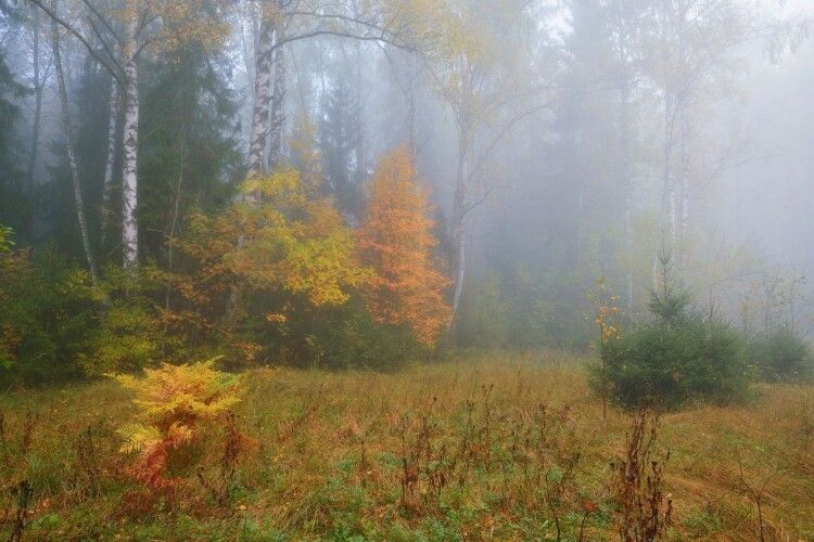 Погода на середу, 13 жовтня: Волинь вкриють тумани