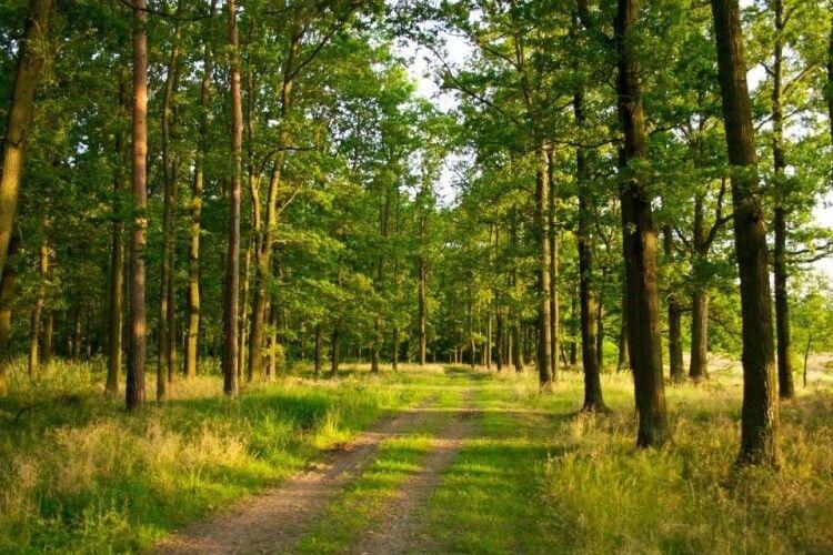 Волинь – четверта за площею вирубаних лісів