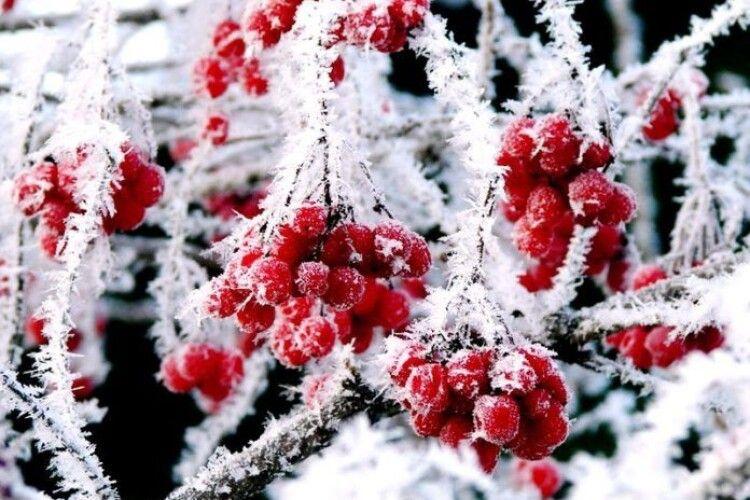 Погода на четвер, 6 лютого: вночі замерзне – протягом дня розтане