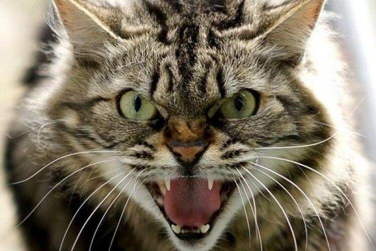 Хворий на сказ кіт покусав хлопця на Острожчині
