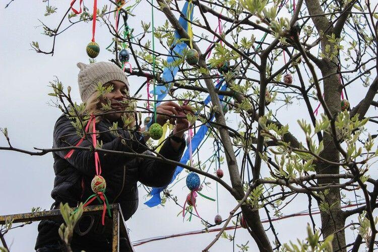У центрі волинського міста «виросло» Великоднє дерево