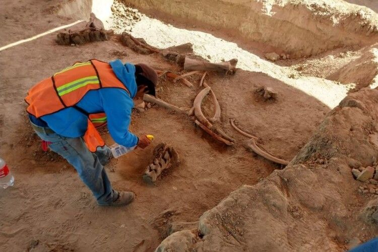 При будівництві аеропорту знайшли кістки десятків мамонтів