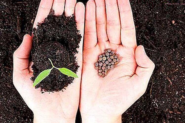 Поради волинським городникам: насіння нагрійте втермосі