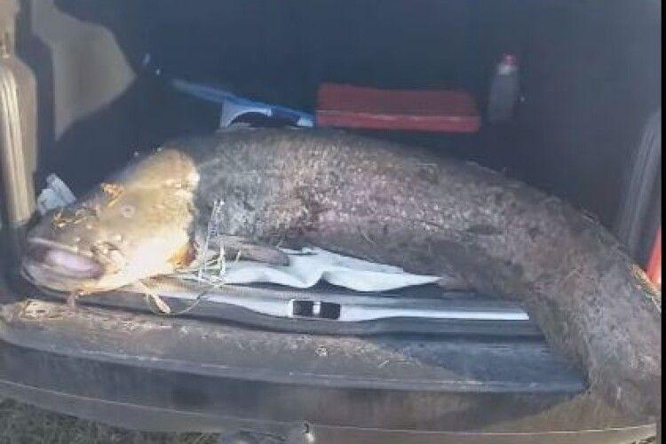 На Рівненщині рибалка впіймав сома-гіганта (Фото)