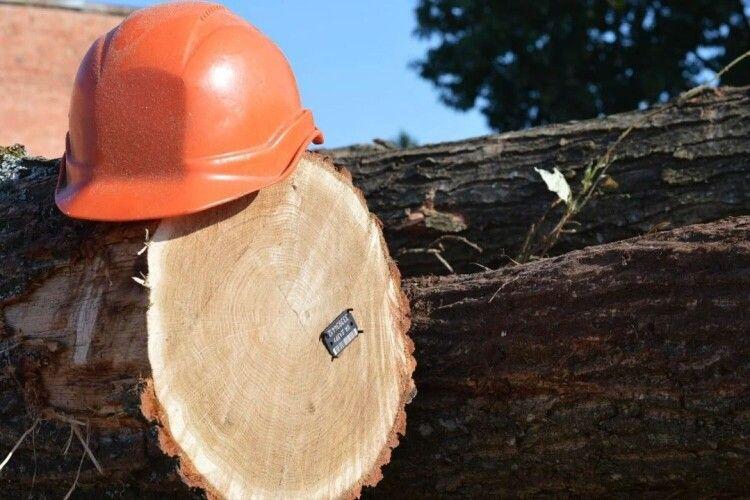 Лісова галузь Волині не змогла втримати минулорічний рівень бюджетних платежів