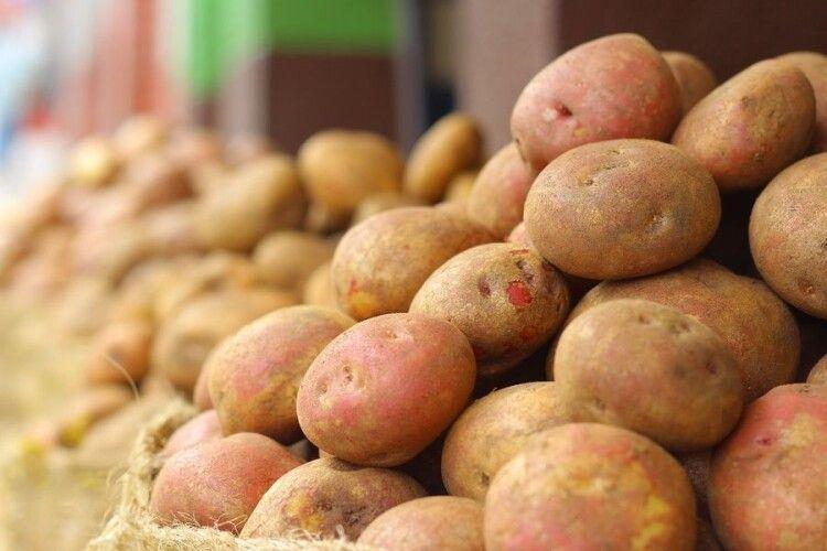 Україна нарощує імпорт білоруської картоплі