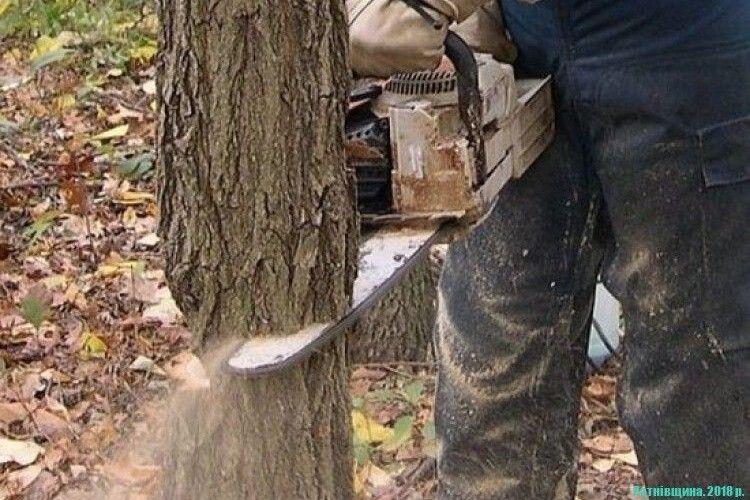 За зрубані 425 дерев на Рівненщині заплатять 400 тисяч гривень штрафу