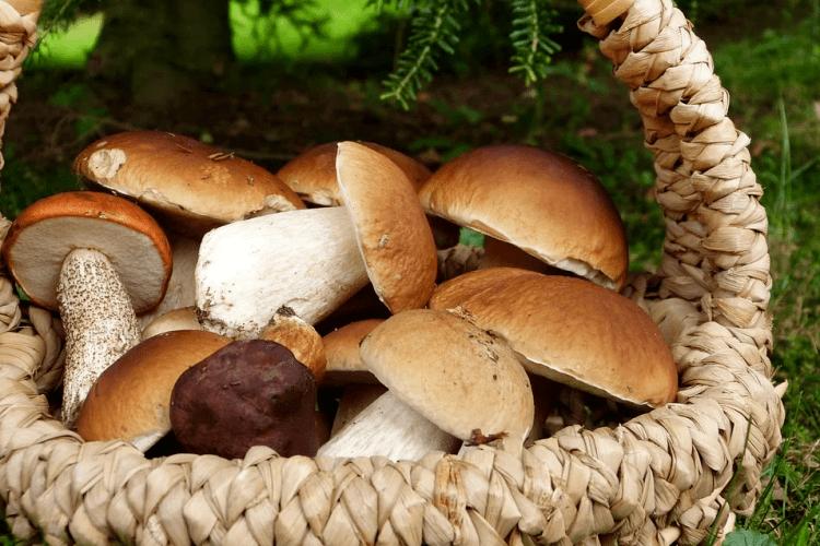 Золота осінь тішить щедрими дарами: гриби самі у відра скачуть