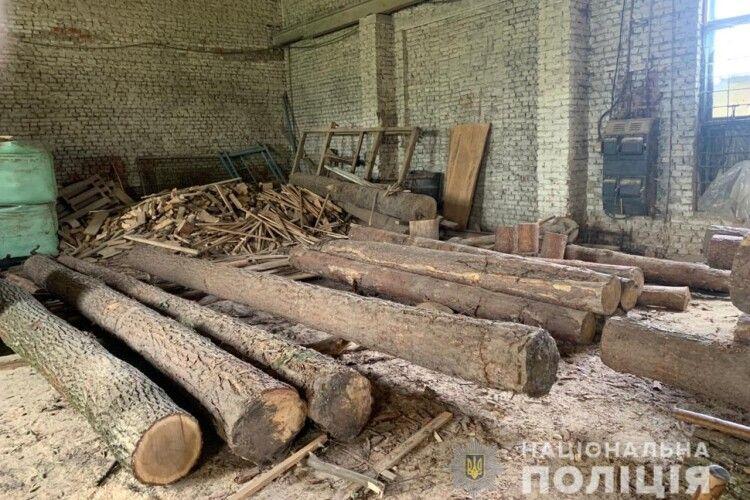 На Волині незаконно напиляли дубів (Фото)
