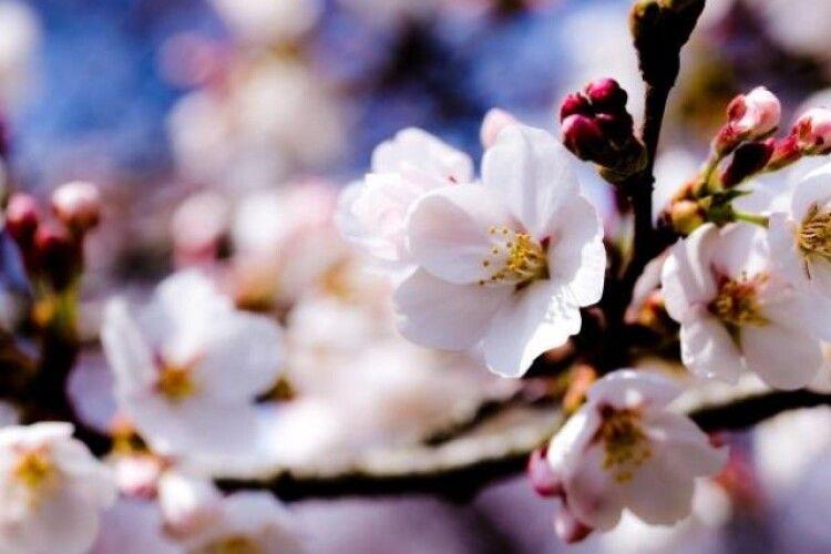Погода на середу, 28 квітня: вночі та вранці на Волині знову сильні заморозки, проте вдень вже буде тепліше