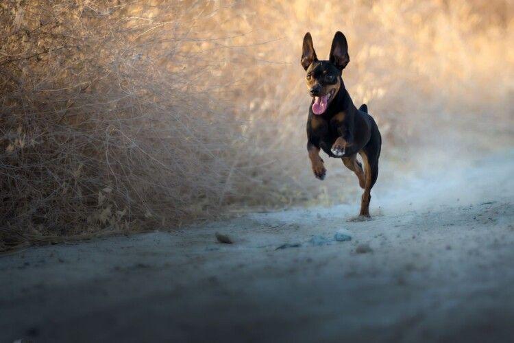 На дорогу вибіг собака: волинянин на мотоциклі потрапив в ДТП