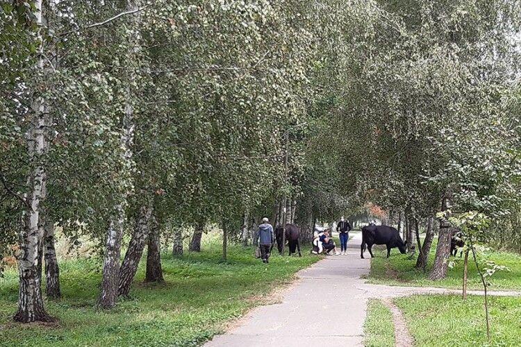 «Все обіс..ано»: парк у Камені-Каширському перетворили на… пасовище