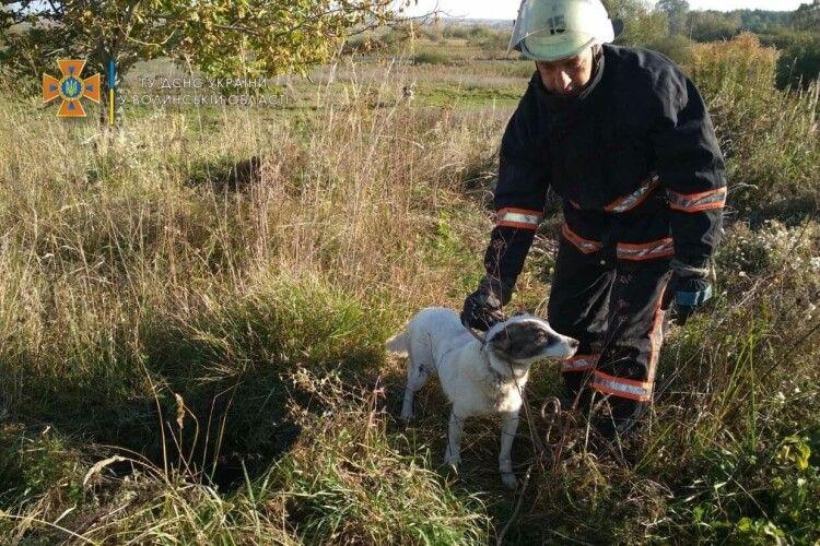 На Волині врятували собаку, який потрапив у пастку