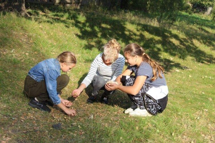 На Любешівщині збирають жолуді для диких тварин