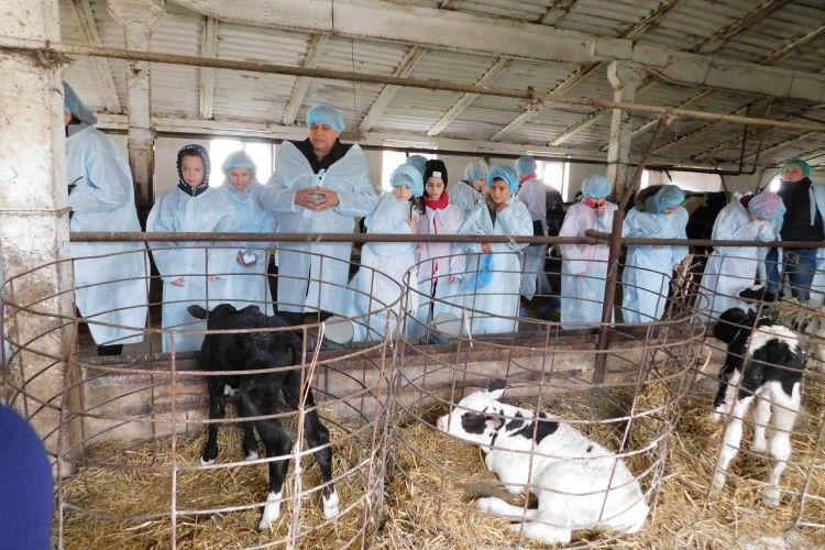 Школярі з Луцька побачили на Горохівщині, як виготовляється якісне молоко (Фоторепортаж)
