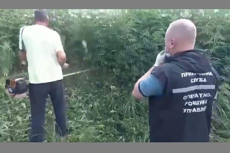 Прикордонники зіпсували комусь «Сію-вію конопелечки»