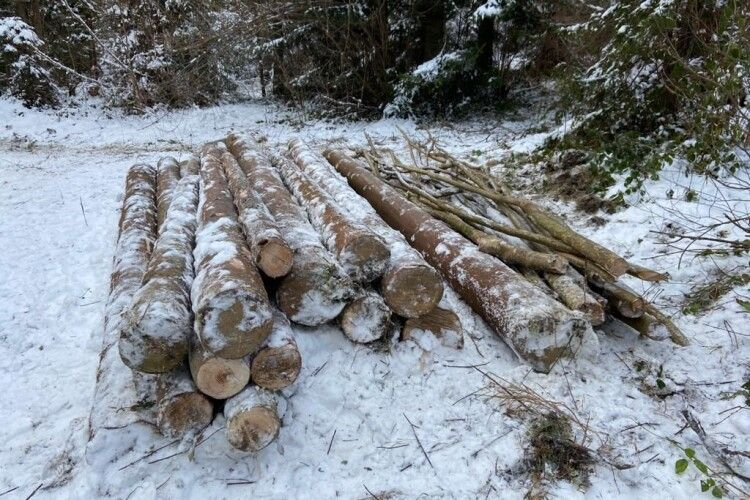 Волинянин піде під суд за те, що незаконно зрубав три сосни в лісі